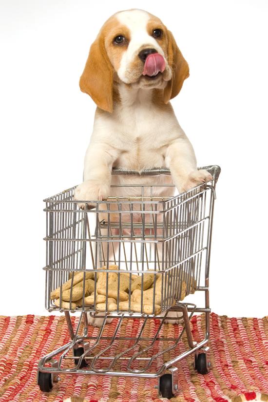 ingyenes állateledel szállítás