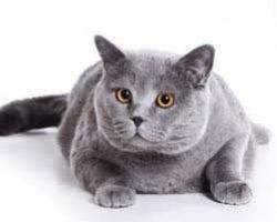 Száraztápok, eledelek speciális igényű cicáknak