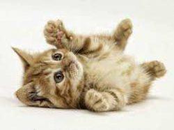 Fiatal, fejlődő cicáknak