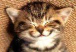Akciós alom, felszerelés cicáknak
