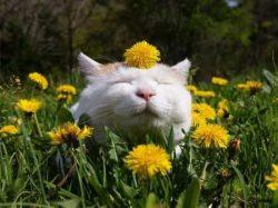 Akciós Happy Cat táp macskáknak