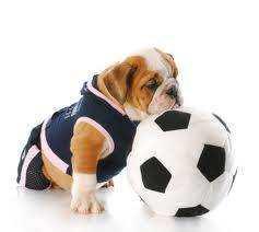 Magas energiaigényű kutyáknak