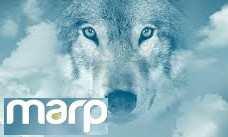 Marp prémium kutyatápok