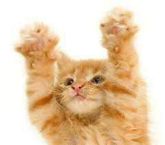 Happy Cat kóstoló csomagok
