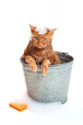 Ápolás, felszerelés a cicák jó kedvéért