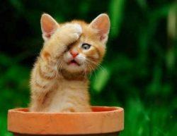 Happy Cat Sensitive macskatápok