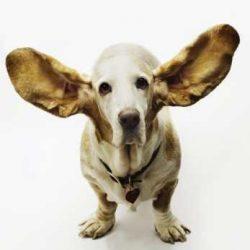 Fül és szem tisztítás, ápolás