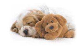 Kutya fekhelyek, matracok