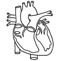 szívbeteg macska