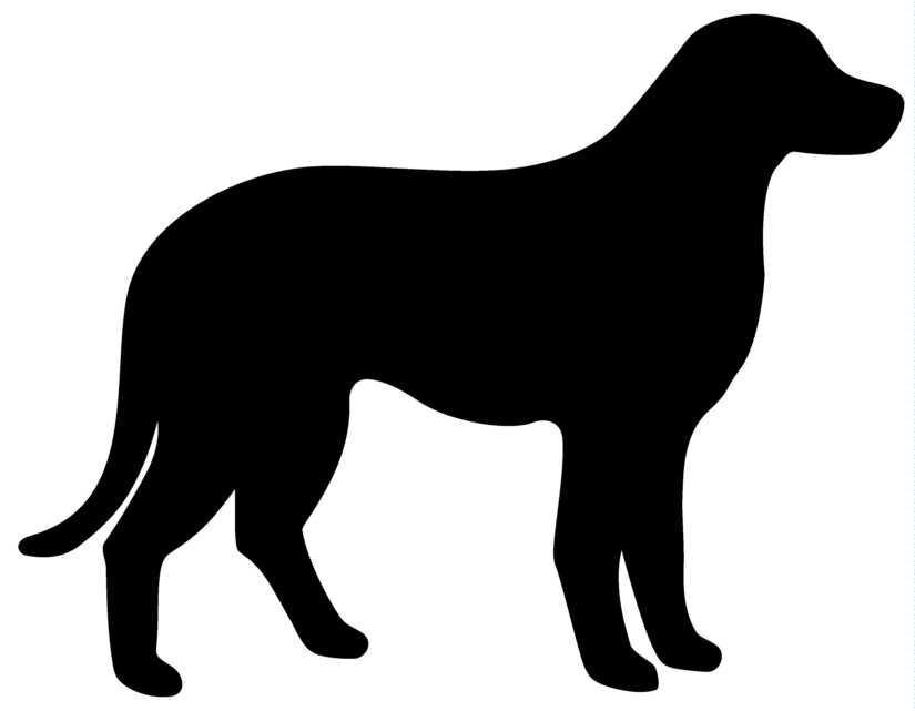 kutya elhízás, cukorbetegség