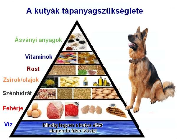 kutya tápanyagszükséglete