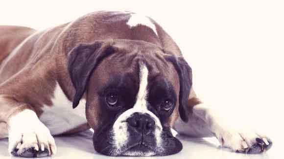 Miért hányt a kutyám evés után?