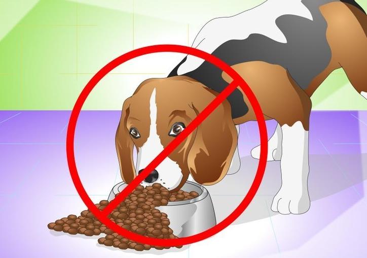 kutya túletetés