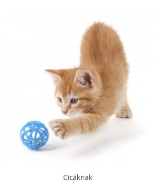 macskaeledel webáruház