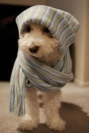 Kennelköhögés, kutyák gyakori, őszi megbetegedése...