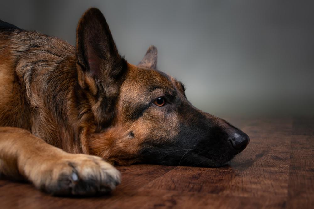 kutya hány