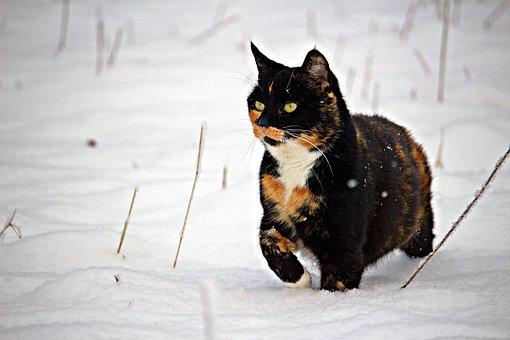 Kijárós macska télen, hóban