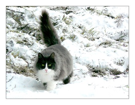 Kinti macska télen