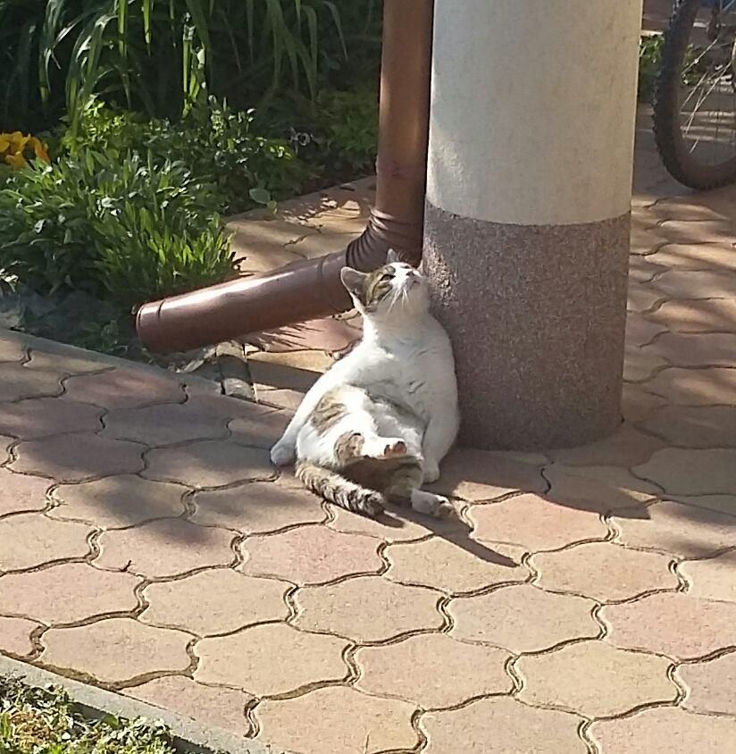 macska etetése
