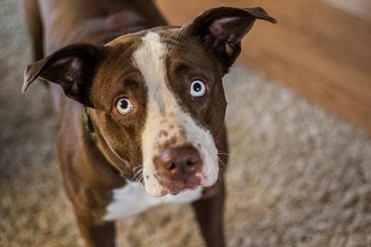 Miért néz a kutyám olyan szomorúan?