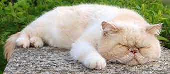idős macska, öreg cica