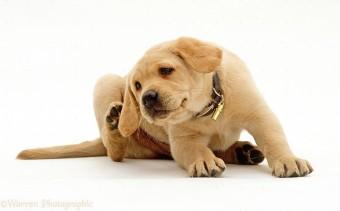 kutya nyakörv